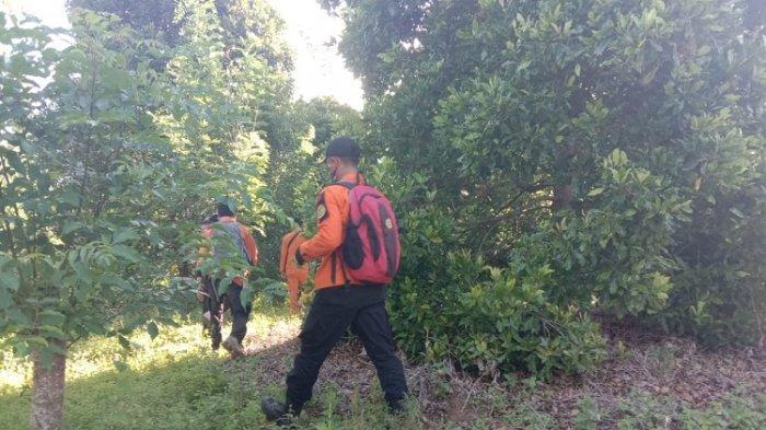 Hari Keempat Pencarian, Kakek Kua yang Hilang di Hutan Tamboli Kolaka Belum Ditemukan