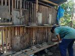 ayam-kampung-ciranjang-kelurahan-cikalang-kecamatan-tawang-kota-tasikmalaya.jpg