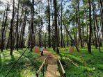 hutan-pinus-samparona-baubau.jpg