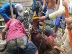 proses-evakuasi-seekor-sapi-yang-masuk-ke-dalam-sumur-sedalam-10-meter-di-magelang.jpg
