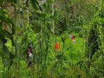 warga-bersama-tim-pencarian-dan-pertolongan-mencari-korban-hilang-di-hutan.jpg