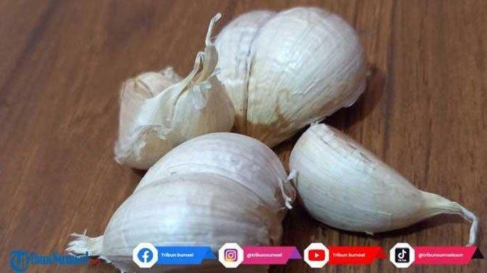 Prof Magestuti Agil Ingatkan Obat Herbal Tradisional Hanya Untuk Mencegah Bukan Mengobati Covid-19