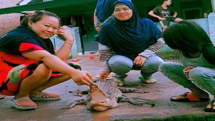 Buaya Sering Makan Ternak di Kelurahan Nikan Jaya Lubuklinggau Ditembak Mati Warga