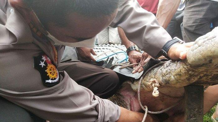 Gadis di Kalimantan Hendak Mandi Tewas Diterkam Buaya, Ternyata Diterkam Buaya Ompong