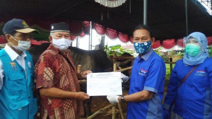 Edaran Pemkot Palembang Tentang Pemotongan Kurban saat Pandemi, Harus Pakai Alat Pelindung Diri