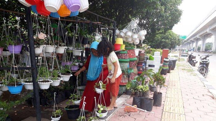 5 Tempat Penjual Tanaman Bunga Hias Di Kota Palembang Paling Recomended Dan Lengkap Tribun Sumsel