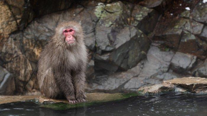 Gejala Virus Monkey B yang Sedang Heboh di China, Usai Seorang Dokter Meninggal Karena Terinfeksi