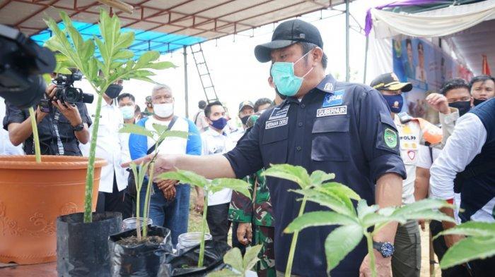 Selain Lumbung Beras, Gubernur Herman Deru Dorong Banyuasin Jadi Sentra Porang