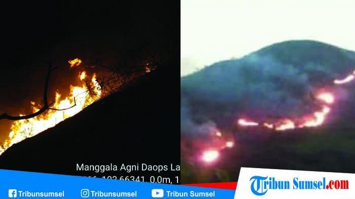 Kebakaran Hutan di Bukit Besar Lahat, Api Berada di Puncak Sulit Dipadamkan