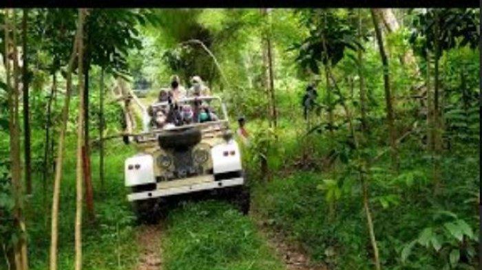 Sensasi Baru Keliling Hutan Wisata Punti Kayu Palembang Pakai Jeep, Ini Tarifnya