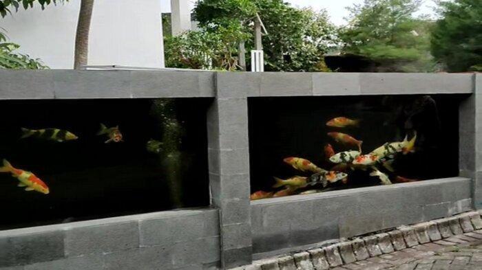 Viral Kolam Ikan Koi jadi Pagar Rumah, Tuan Rumah Sebut Habiskan Biaya Rp50 Juta