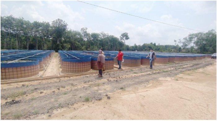 Nasabah DHD Farm Pangkalan Balai Banyuasin Tanya Kejelasan Dana Investasi, Ternak Lele Tetap Jalan
