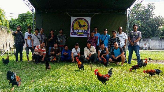Komunitas Pelestari Ayam Hutan dan Keturunan (KOMPAK) Sriwijaya Palembang Gelar Kopdar