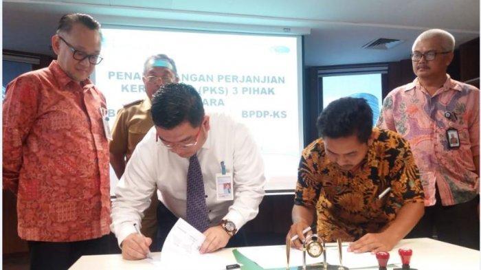 Bank Sumsel Babel Siapkan Dana Rp 120 Miliar untuk Kredit Peremajaan Sawit di 3 Kabupaten