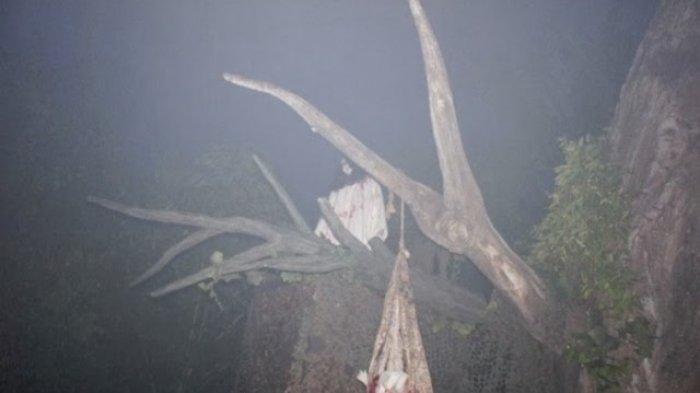 Ngeri, Ini Dia Pohon-pohon yang Biasa Dihuni Oleh Hantu