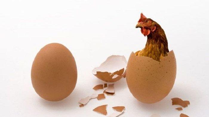 Hentikan Konsumsi Putih Telur Berlebihan, Bisa Keracunan, Ahli Ungkap Alasannya