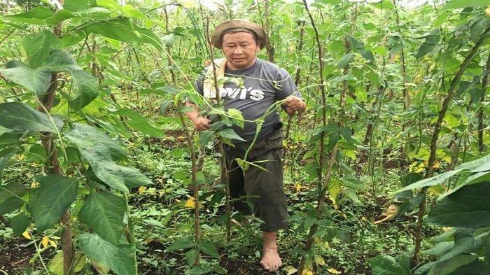 Mantan Kabareskrim Komjen Pol (Purn) Susno Duadji berada di Kebunnya.