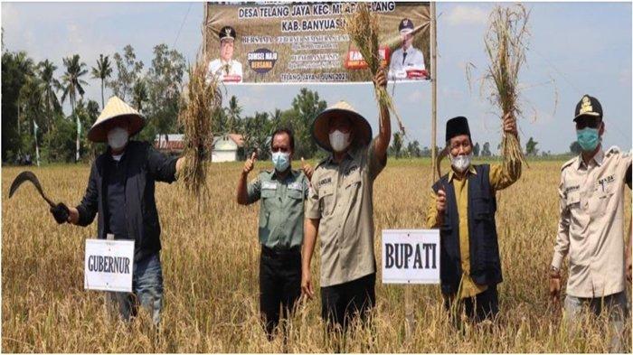 Bupati Banyuasin Askolani Dampingi Gubernur Sumsel Herman Deru Panen Raya di Desa Telang Jaya