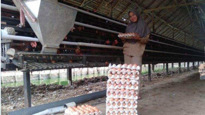 PKL Siswa SMK-PP Negeri Sembawa Memanen Telur Ayam di CV Candi Farm