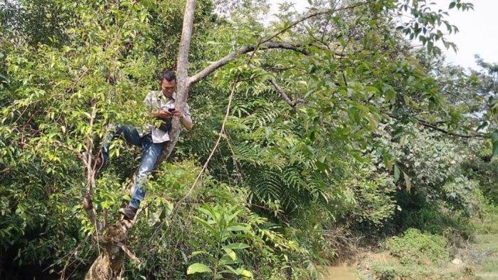 Cari Sinyal Terkadang Harus Naik Pohon, Cerita Warga Muratara Sulit Dapatkan Layanan Internet