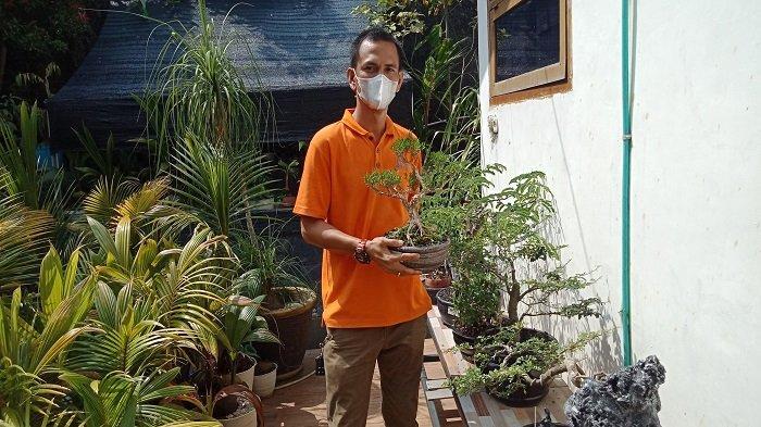 Cerita Endriyansyah, Warga Lahat Menyulap Gulma Bagi Petani Menjadi Bonsai Mahal