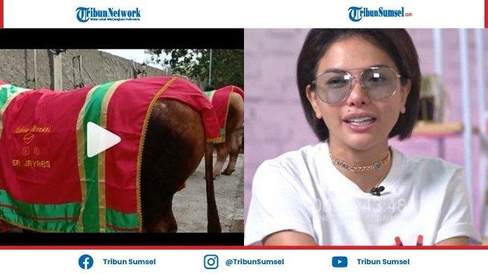 Nikita Mirzani Kurban 5 Ekor Sapi Montok di Hari Raya Idul Adha Besok