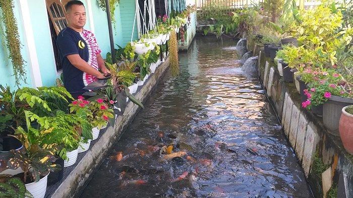 Cerita Yudi, ASN Pemkot Pagaralam Bangun Kolam Ikan Koi Karena Hobi, Kini Jadi Penghasilan Tambahan