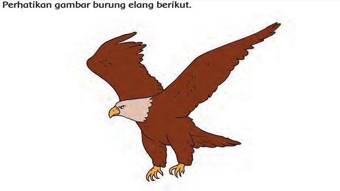 Gambar Burung Elang Jawa