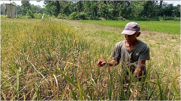 Masyarakat Muratara Diminta Tidak Hilangkan Budaya Bertani, Pemerintah Siap Bantu Petani