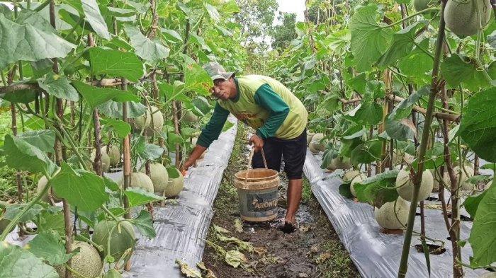 Kelurahan Sukamulya Palembang Jadi Kampung Wisata Edukasi Pertanian