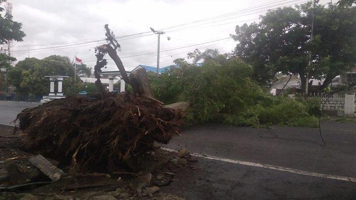 Pohon Besar Didepan Rumdin Wabup Lahat Tumbang, Jalan Kolonel Barlian Tertutup
