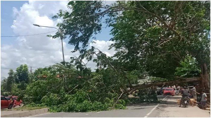 Pohon Tumbang di Jalan Palembang-Indralaya Dekat Terminal Karya Jaya, Mobil Terpaksa Lawan Arah
