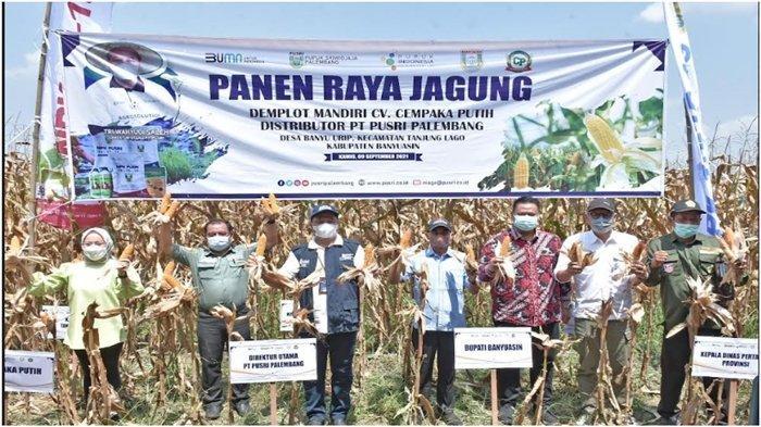 Program Makmur Berhasil Tingkatkan Produktivitas Panen Jagung Hingga 18 Persen