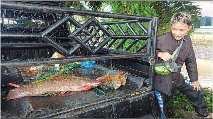 Irigasi Keligi Tugu Mulyo Lubuklinggau Dikeringkan, Rendi Dapat Ikan 10 Kg