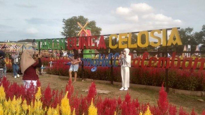 Taman Bunga Celosia Destinasi Baru Wisata di Palembang, Ini Tarif Masuk dan Lokasinya