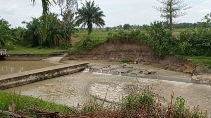 Tanggul Irigasi di Desa Kurungan Nyawa Jebol, Puluhan Ribu Hektar Sawah Terdampak