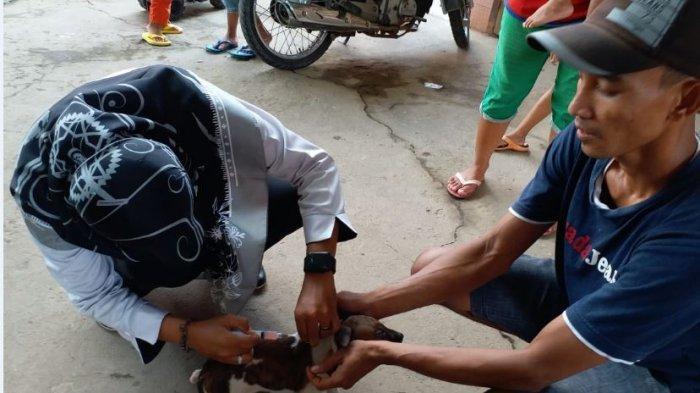Jadwal Vaksinasi (Vaksin) Rabies Gratis di UPT Pusat Kesehatan Hewan Muba, Setiap Senin-Kamis