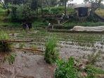 areal-kebun-sayur-di-desa-mekar-alam-pagaralam-terendam.jpg