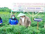 cabai-lado-bersama-petani-di-desa-sukanegara-kecamatan-belitang-iii-kabupaten-oku-timur.jpg