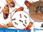 cara-usir-serangga.jpg