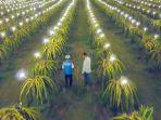 electrifiying-agriculture-merupakan-salah-satu-komitmen-pln-123.jpg