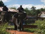 evakuasi-gajah-liar-di-wilayah-mekakau-kabupaten-oku-selatan.jpg