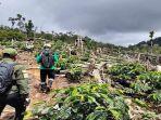 hutan-lindung-di-pagaralam-beralih-fungsi-jadi-kebun-kopi.jpg
