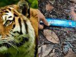 ilustrasi-harimau-dan-jejak-kaki.jpg
