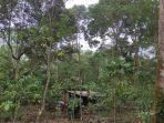 kebun-durian-warga-di-empatlawang-232424.jpg