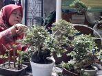 osma-pecinta-bonsai-di-prabumulih.jpg