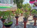 pameran-bonsai-di-baturaja.jpg