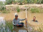 petani-di-desa-pauh-muratara-panen-padi-yang-terendam-banjir.jpg