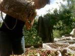 petani-kopi-di-desa-kota-agung_20150724_155154.jpg