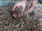 petani-kopi-di-muara-pinang-empat-lawang-mengakui-dua-tahun-terakhir-harga-tidak-naik.jpg